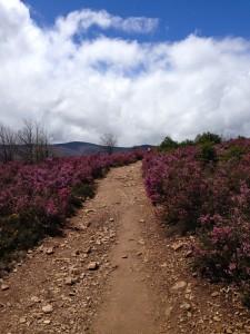 A caminho de Fontebadón